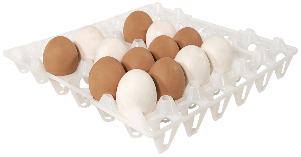 Eierlagerung